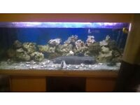 4ft 11 fish tank with 8 ciclids pelky tropical need goy as gettin new settee