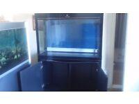 Cleair Aquatics 5ft Aquarium