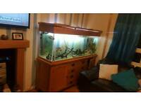 Large fish tank full set up