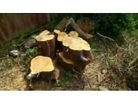 Logs dor chiminea or wood burner