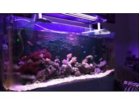 5ft 450l aquarium. Curved corner, excellent condition