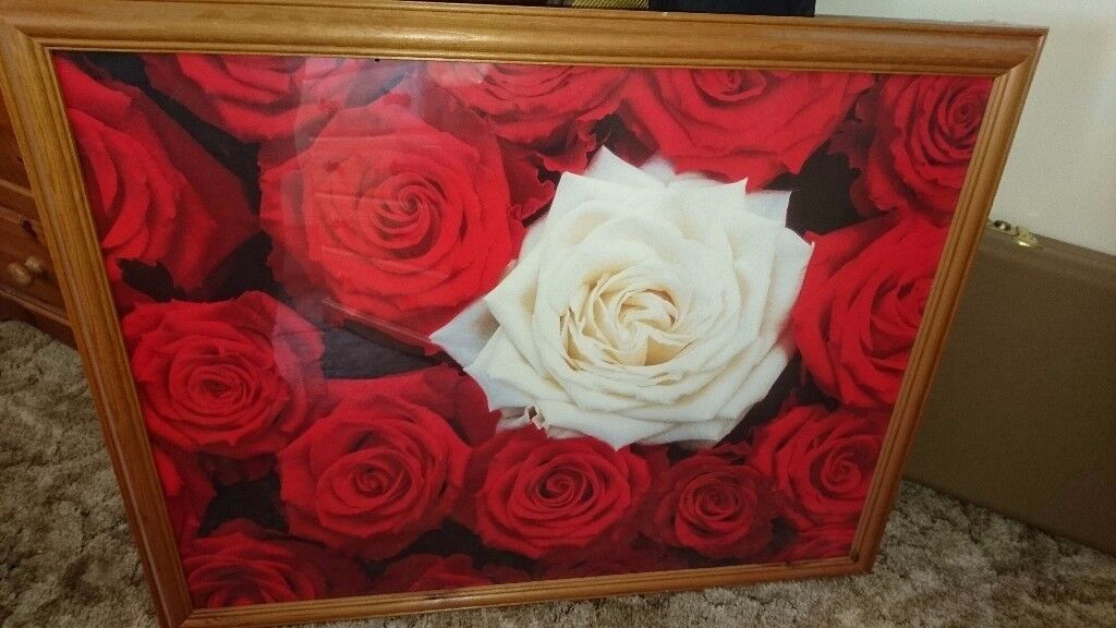 Rose picture in pine frame