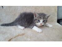 1 fluffy kitten