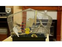 White budgie complete with cage and accessories