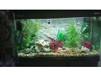 4ft fish tank & unit
