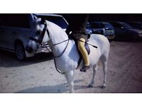 Supersafe 12.2hh pony for loan