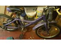 FREE Bikes!!!