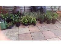 Various shrubs