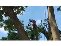 Tree & Landscape Solutions
