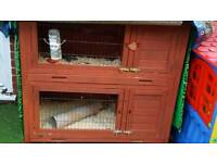 3 guinea pigs and two tier hutch for sale