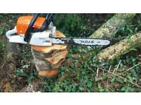 Tree work small tree felling pruning hedge & grass cutting winter tidy up garden maintenance