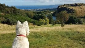 Capital Canines Dog Walking - Balgreen, Edinburgh