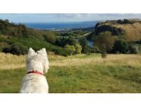 Capital Canines Dog Walking - Balgreen, Edinburgh