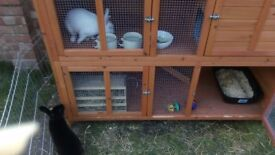 Bluebell Double Hutch and waterproof Cover