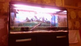39in x17in x15in interpet fish tank and cabinet