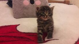 4 Kittens For Sale - Available Immediately - Call 078 9450 1217