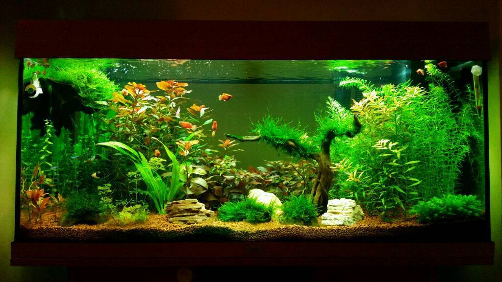 juwel rio 180 aquarium in hull east yorkshire gumtree. Black Bedroom Furniture Sets. Home Design Ideas