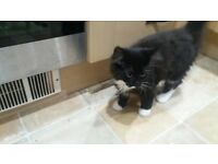 16 week old kitten