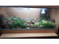Lovely crested gecko and 3ft viv £100