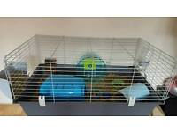 guinea pig and Large cage for sale