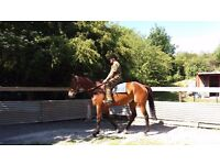 Ideal Ladies Horse.