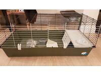 2 Week Old Hutch for Sale