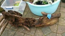 Bogwood massive piece 3ft long