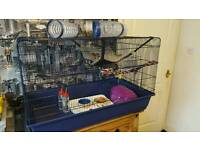 3 female rats with cage