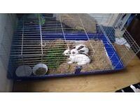 6 month female rabbit & set up