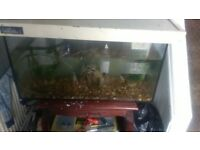 large fish tank with water eel