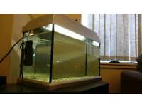 40l fish tank and 3 platy need a home