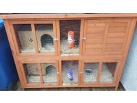 Two young rabbit plus hutch