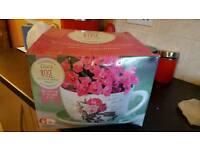 Giant tea cup & saucer planter