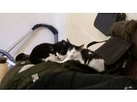 TWO 6 MONTH OLD KITTENS FOR SALE
