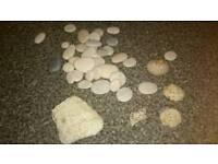 Pebbles and shells for aquarium