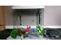 90l tropical fish tank