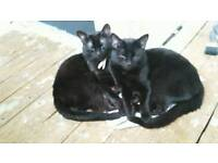 2 house cats need new home