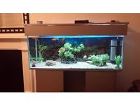 large fishtank with stand