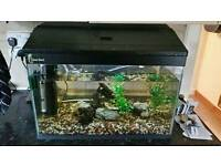 Fish tank with fish, shrimp and accessories