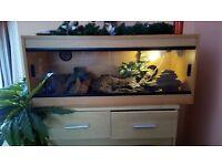 Leopard gecko all set up