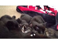 beautiful 4 kittens for sale
