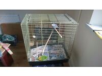 Budgie and large cage.