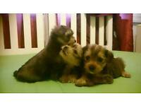 Three female puppies are looking for a new home