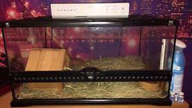 Reptile tank has snake in atm
