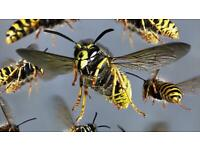 Pest control WASPS DESTROYED from £25 . 07889261187