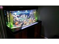 Fluval vicenza 260 limted edtion tank stand fish aquaruim