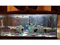 80L fish tank
