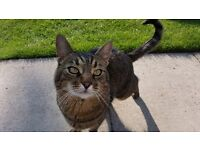 Reward -Missing Tabby Cat from East Yorkshire