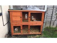 Rabbit Hutch & 1female rabbit
