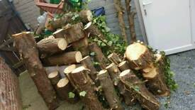25 Pine Wood Logs